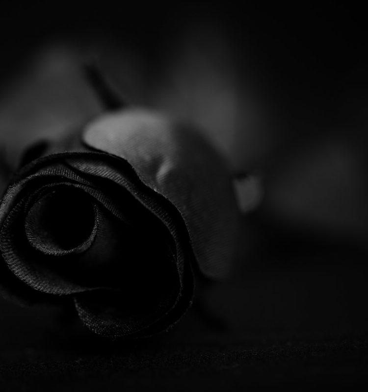 Noireee @ Dark Rose